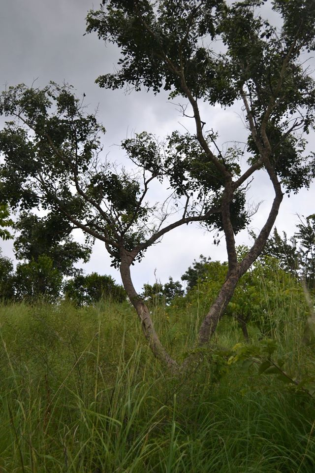 trekking in ramanagaram