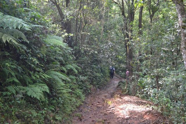 kudremukh trek morning 6