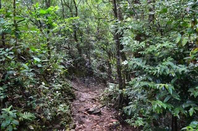kudremukh trek morning 9