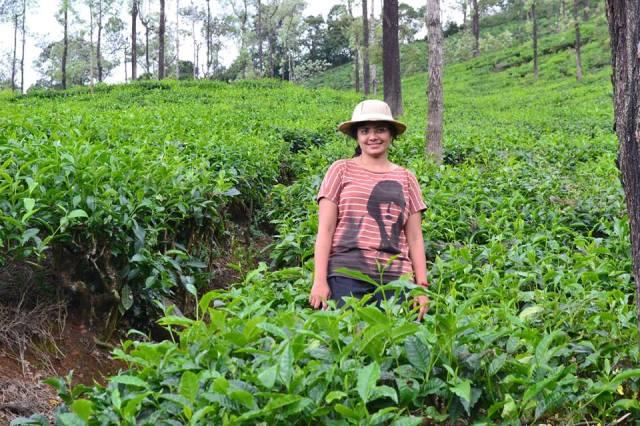 tea plantation  kudremukh