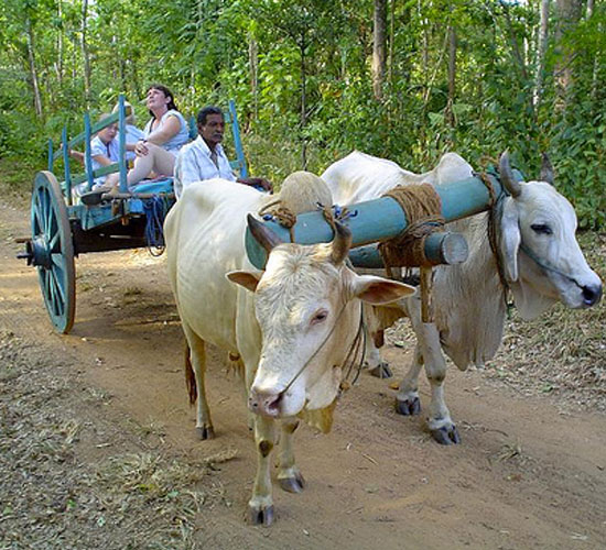 cart-ride
