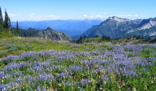 adventure Trek To Valley of Flower
