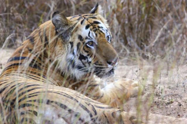 Bandhavgarh National Park 1