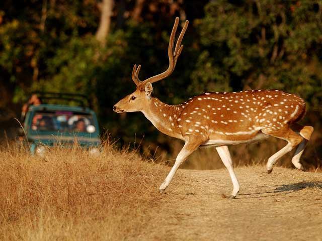 Gir-National-Park-Safari