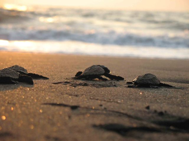 Turtle Festival at Velas with Trek Mates India