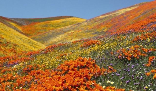 Trek To Valley of Flower dehardun