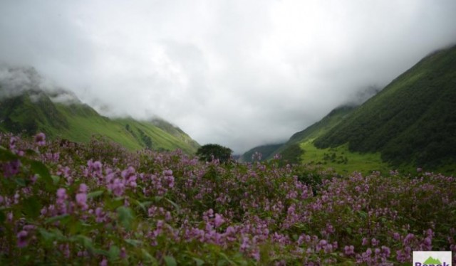 Trek To Valley of Flower india