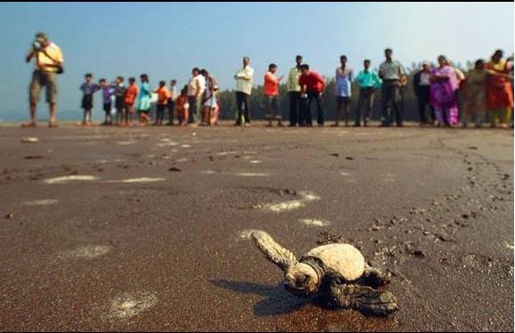 velas-turtle-festival1