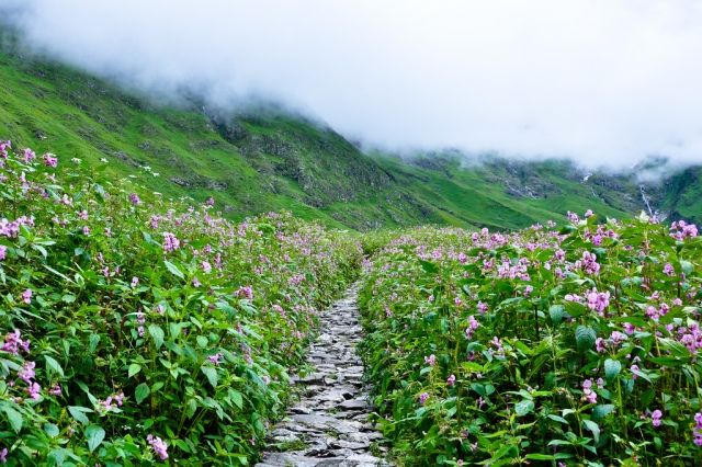 way-to-valley-of-flowers
