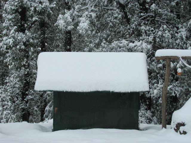Camping In Dense Forest Of Mashobra 3
