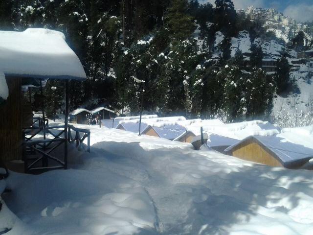 Mashobra Green Camp 11