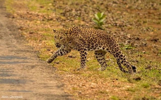 tadoba-wildlife-tour-to-tadoba-tiger-reserve