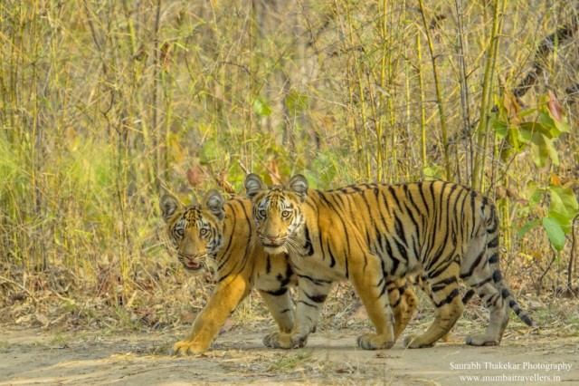 TWO-CUBS-2-001-1-1030x687