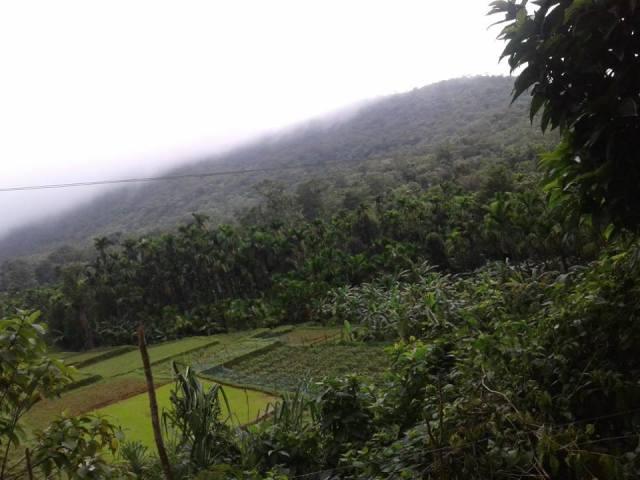 kodachadri trekking route