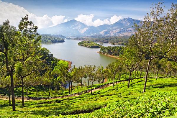 Picnic amidst cloud-kissed Tea Gardens